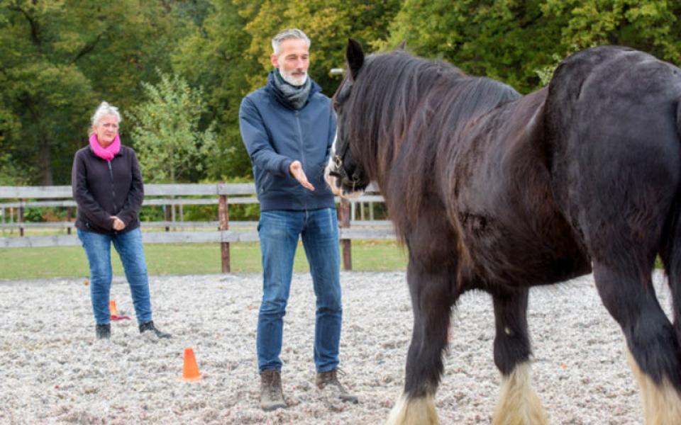 conact_met_paard
