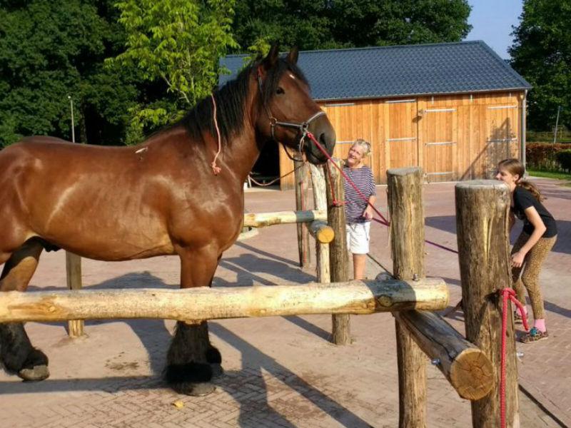 paardenhoeve